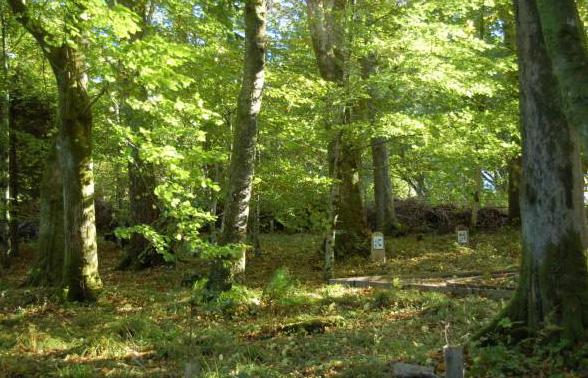 Blarbuie-Woodlands2